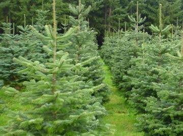 Christmas-Tree-Homepage